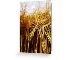 24 Carat Corn Greeting Card