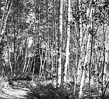 black forest I by jjustinico