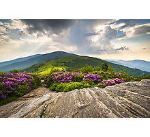 Jane Bald in Bloom - Roan Mountain Highlands Landscape Photographic Print
