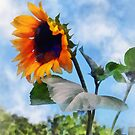 Sunflower Against the Sky by Susan Savad