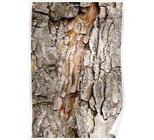Orange Spear Tree Bark Poster