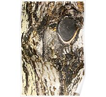Horse Eye Tree Bark Poster