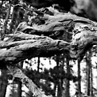 tree stump by sarah noce