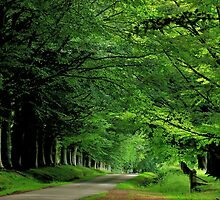 A Scottish summer lane by jchanders