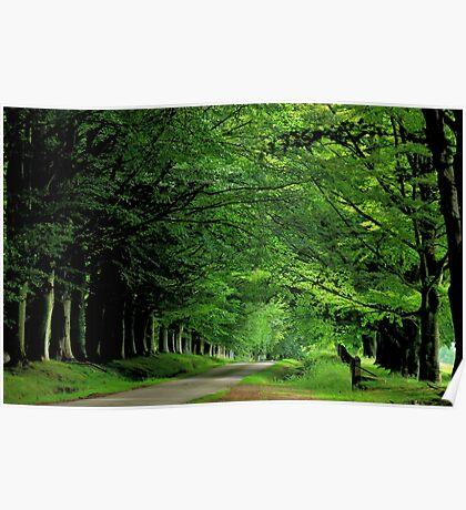 A Scottish summer lane Poster