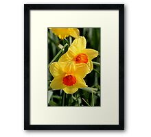 Floriade - Hello Spring Framed Print