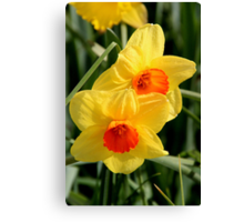 Floriade - Hello Spring Canvas Print