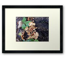 Fungi in the Woods Framed Print
