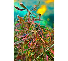 Multi-colored foliage Photographic Print
