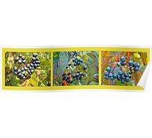 Autumn Viburnum Berries Series - A Trilogy Poster