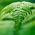Fern by Keld Bach