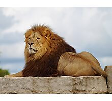 Magnifiscent  King Photographic Print