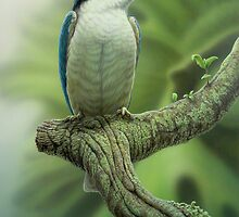 Sacred Kingfisher by Christopher Pope