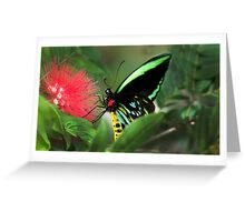Cairns Birdwing Butterfly,  Mission Beach Greeting Card