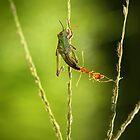 small predators by AdhiPrayoga