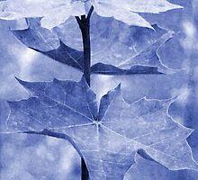 Blue Maple Leaf by Vac1