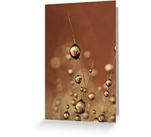 Chocolate Cactus Drops Greeting Card