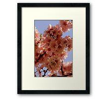Floriade Blossom Framed Print