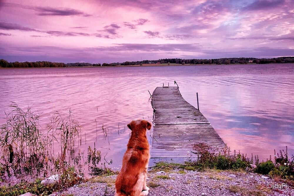 A wonderful new day by LadyFi