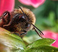 Bee nice by Elaine Game