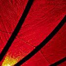 Hoi An Lantern  by salsbells69