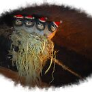 Merry Christmas from fledgling swallows by thudjie