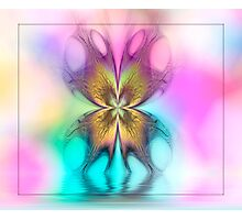 Butterfly Ripples Photographic Print