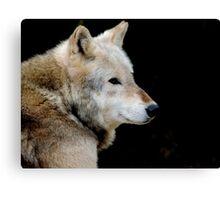 Timber Wolf Three Canvas Print