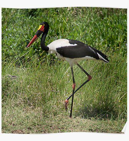 Saddle-billed Stork (Ephippiorhynchus senegalensis), Ol Pejeta, Kenya Poster