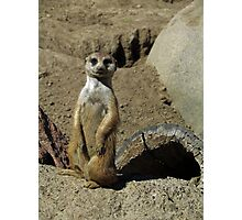 The Most Interesting Meerkat in the World Photographic Print