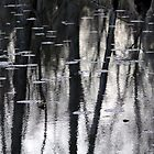 Lily Pads And Trees In Monochrome by Debbie Oppermann