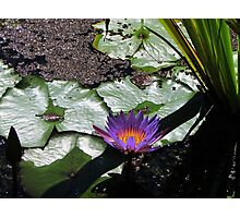 Lily Pad Accessories Photographic Print