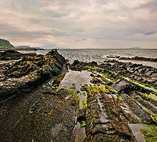 Low tide rocks by Chris Thaxter