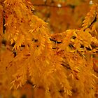 Orange Locust Tree by Karen Jayne Yousse
