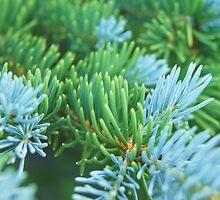 Green & Turquoise Pine Needles by Karen Jayne Yousse