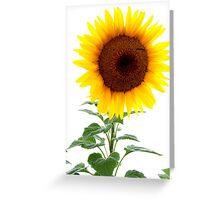 Luminescent Sunflower Greeting Card