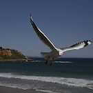 Seagull View by RobsVisions