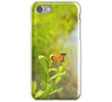 Beautiful Viceroy Butterfly Limenitis archippus near lake iPhone Case/Skin