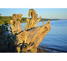 Ocean Driftwood  Photographic Print