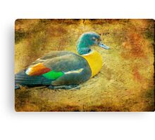 """Duck 1 (from """"Ducks"""" collection) Canvas Print"""