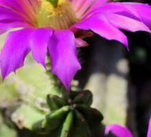 Pretty Purple Cactus Flowers Sticker
