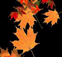 Colorful autumn maple leaf design  by Mariannne Campolongo