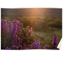 Pil Tor Sunset Poster