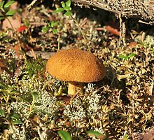 mushroom  by mrivserg