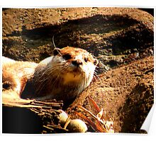 Lone Otter Two Poster