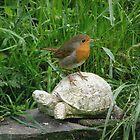 Robin 2 by jamluc