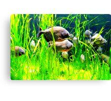 Piranhas Canvas Print