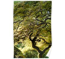 Magical Tree Poster