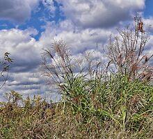 Tall Grass and Sky by vigor