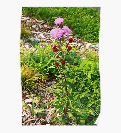 Hairy Purple Flower Poster
